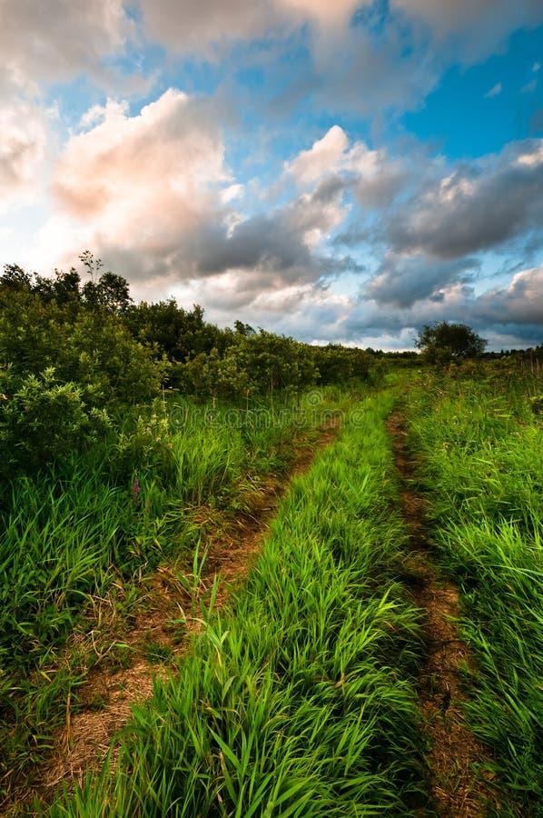 Pistas rurales de la manera de la hierba en la salida del sol foto de archivo libre de regalías