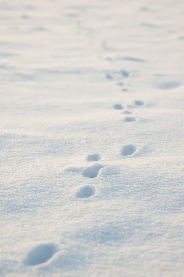 Piste animali in neve immagini stock libere da diritti