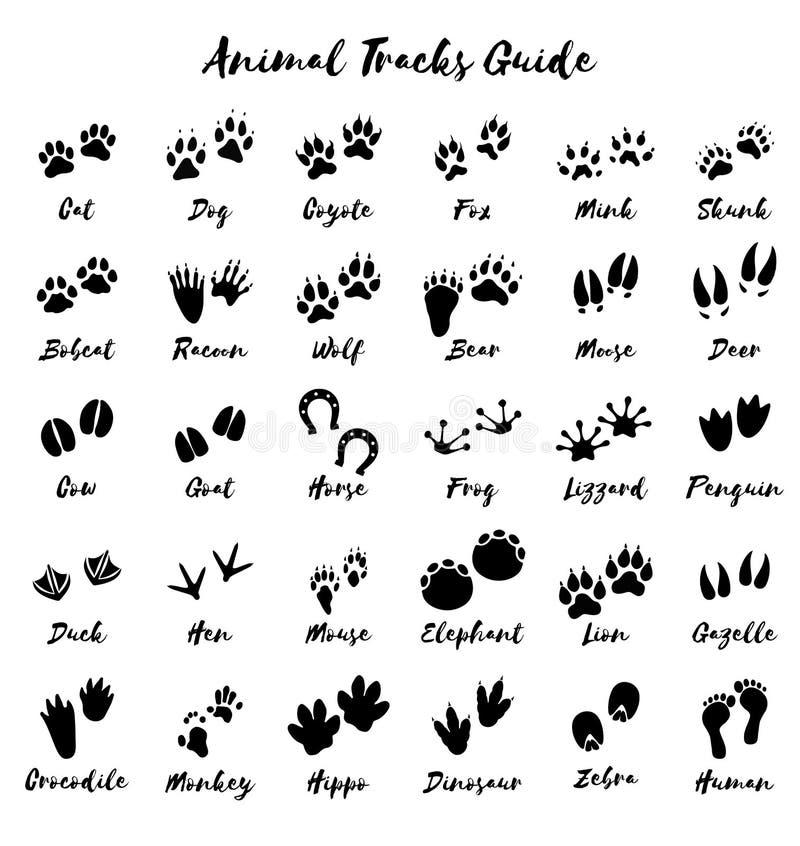 Piste animali - vettore della guida della stampa del piede royalty illustrazione gratis