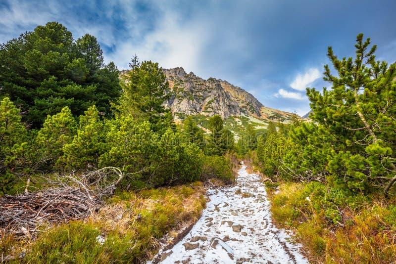 Piste de randonnée en montagne dans la vallée de Mlynicka à la fin de l'automne image libre de droits