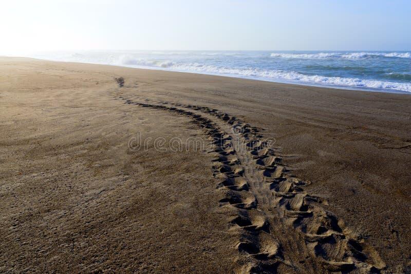 Piste de tortue sur la plage de sable photographie stock