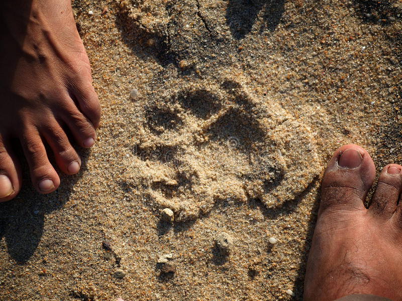 Piste del leopardo immagini stock