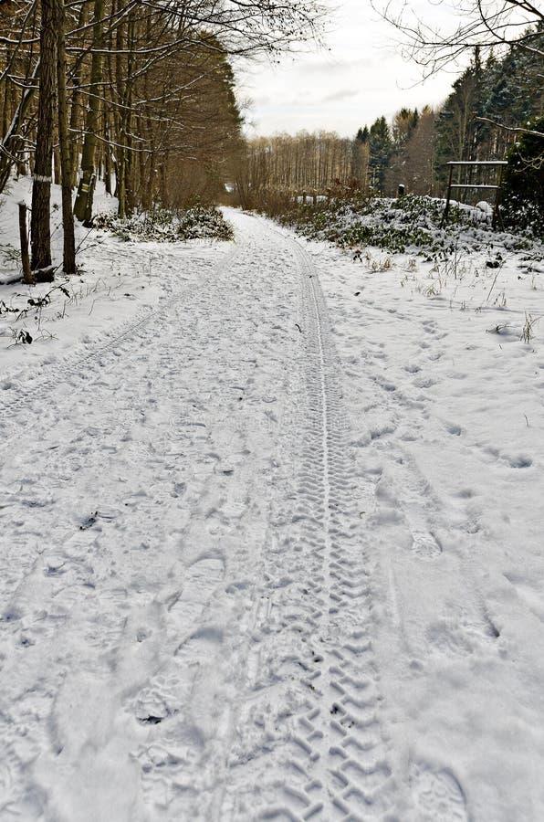 piste del pneumatico sul sentiero forestale innevato immagine stock