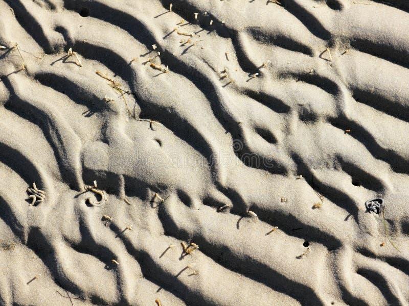 Piste del verme nelle secche scoperte a bassa marea a bassa marea fotografie stock libere da diritti