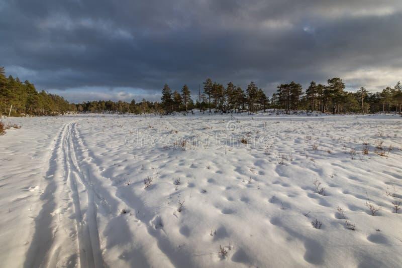 Piste di corsa con gli sci nel paesaggio di inverno in Norvegia fotografia stock libera da diritti