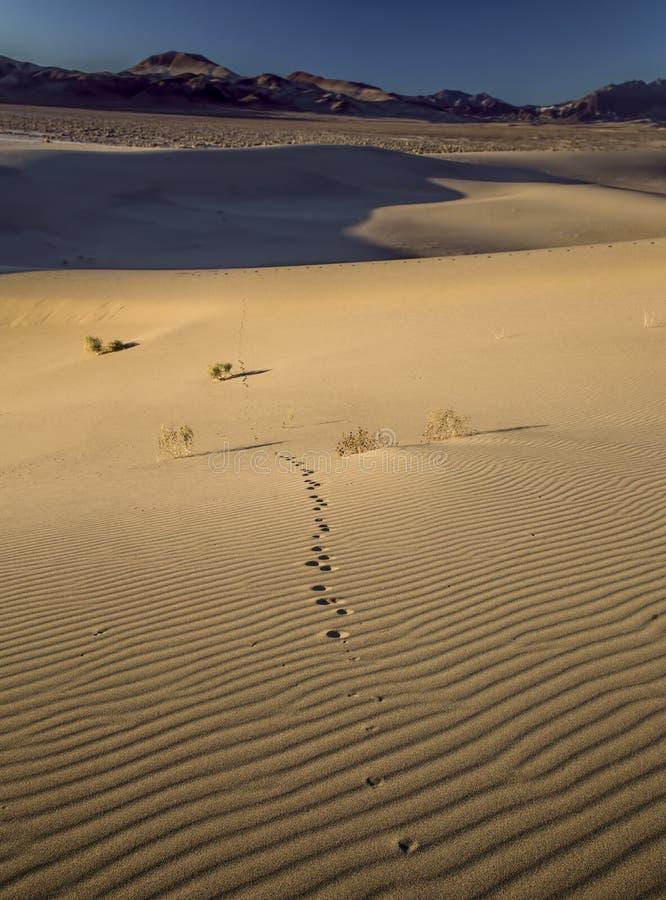 Piste nella sabbia fotografie stock libere da diritti