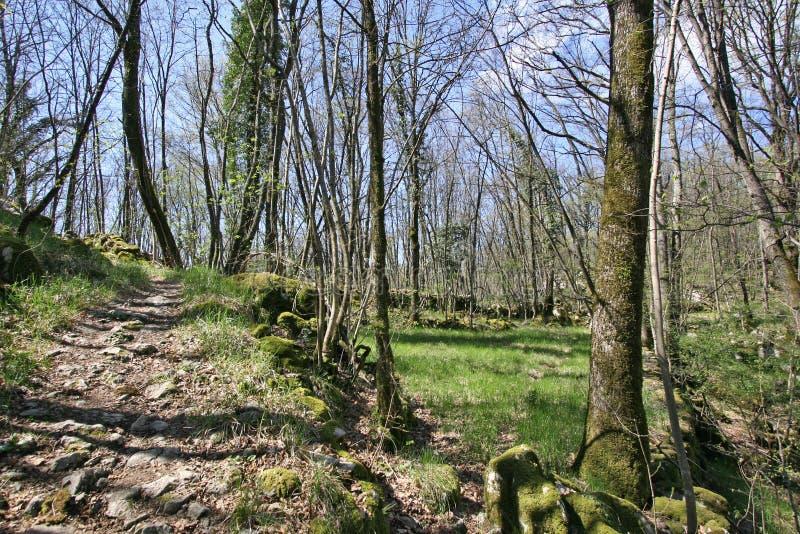 Piste par la forêt photos stock