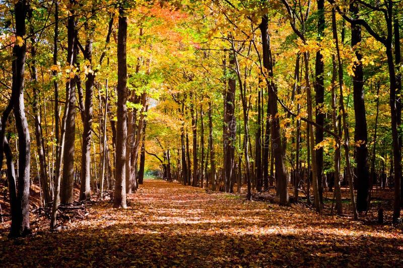 Piste par la forêt d'automne photographie stock libre de droits