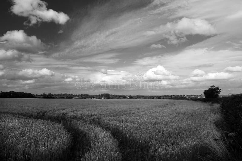 Download Pistes dans le wheatfield photo stock. Image du campagne - 64504