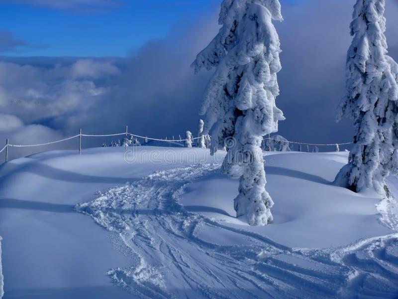 Pistes fraîches dans la neige photo libre de droits