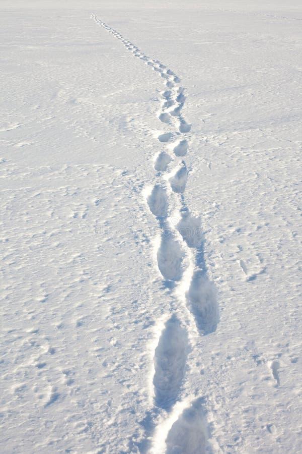 Pistes humaines dans la neige images libres de droits