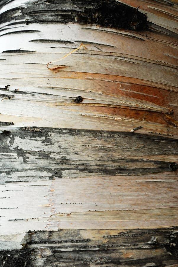 Pistes sur l'écorce d'arbre photo libre de droits