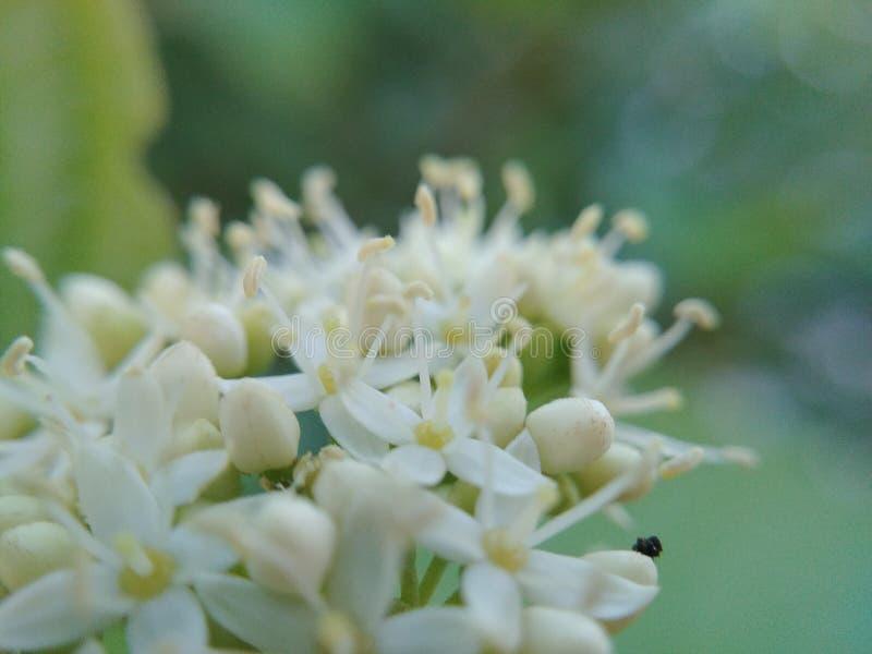 Pistils White flower. Macro on pistils stock image