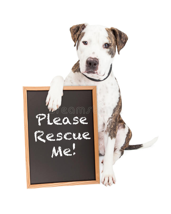 Pit Bull Dog Holding Rescue-Zeichen lizenzfreies stockbild