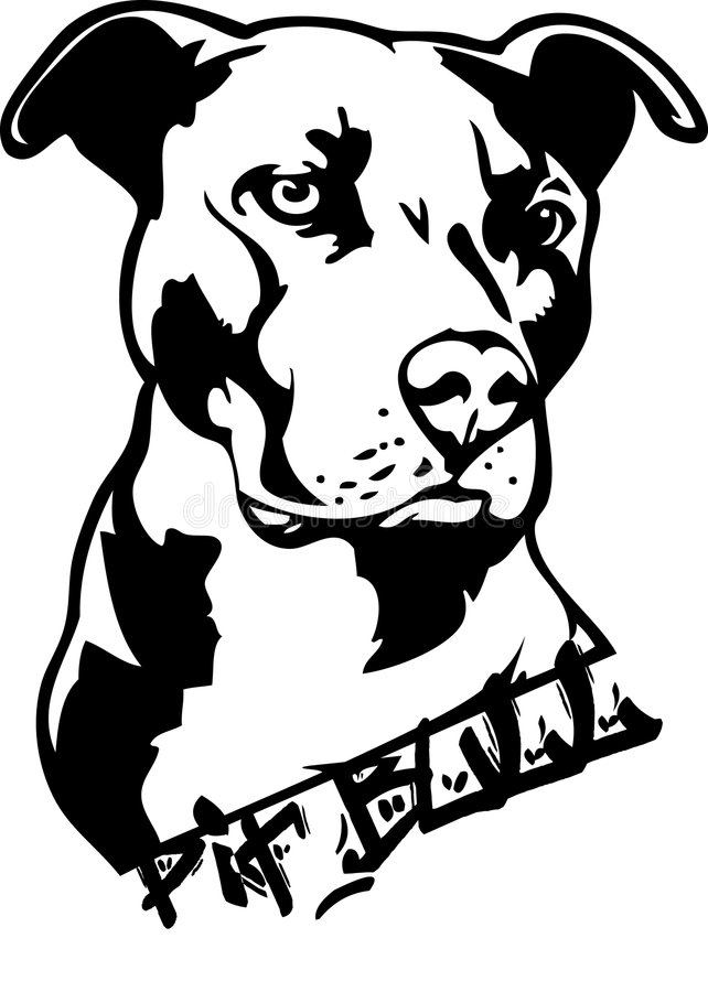 Pit bull dog illustration. Black and white illustration of a pit-bull dog