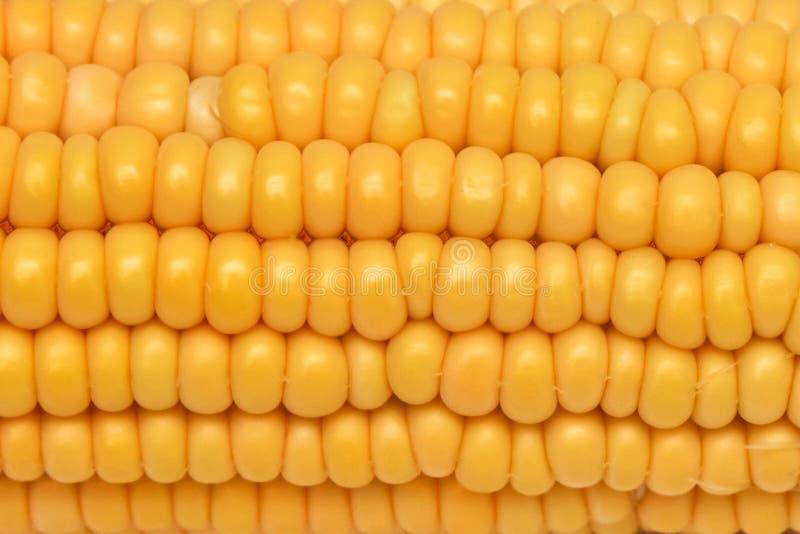 Pit van het close-up de wasachtige graan wit en geel op een witte achtergrond Gouden geel rijp maïsclose-up royalty-vrije stock afbeelding
