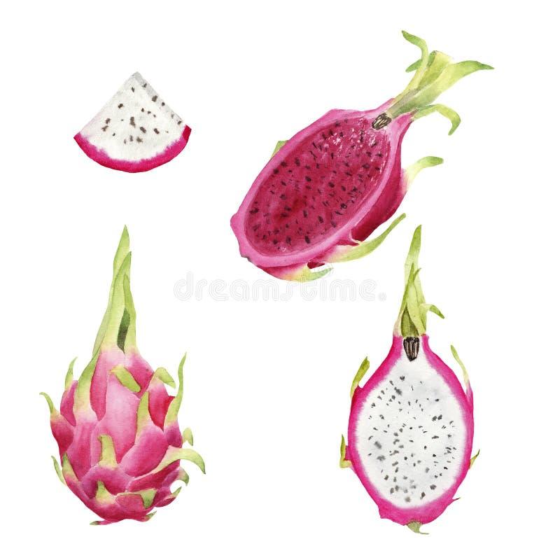 Pitaya variopinto dell'acquerello del brigt disegnato a mano, intera frutta e fetta illustrazione vettoriale