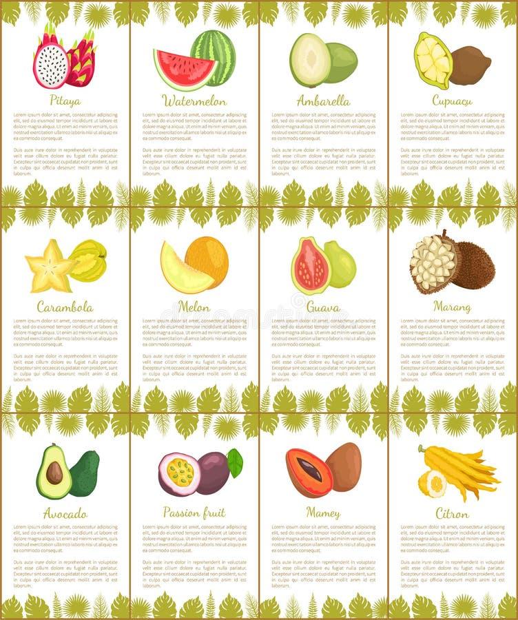 Pitaya and Watermelon Marang Citron Posters Vector. Pitaya and watermelon posters set vector. Tropical exotic fruits ambarella and cupuacu, carambola and mamey royalty free illustration