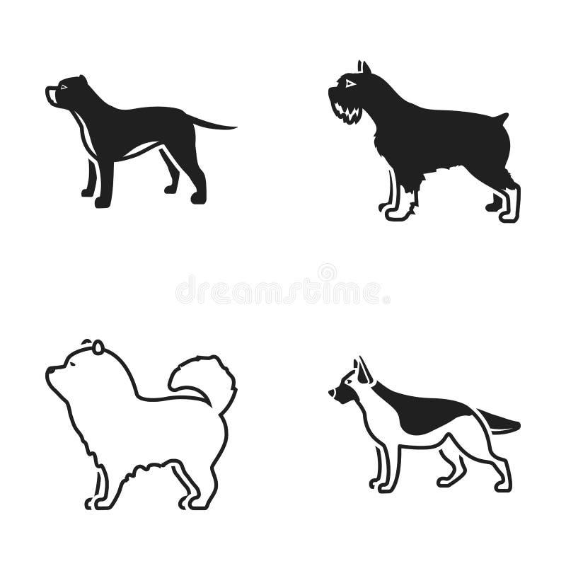 Pitbull, berger allemand, chow-chow de bouffe, schnauzer Les races de chien ont placé des icônes de collection en stock noir de s illustration stock