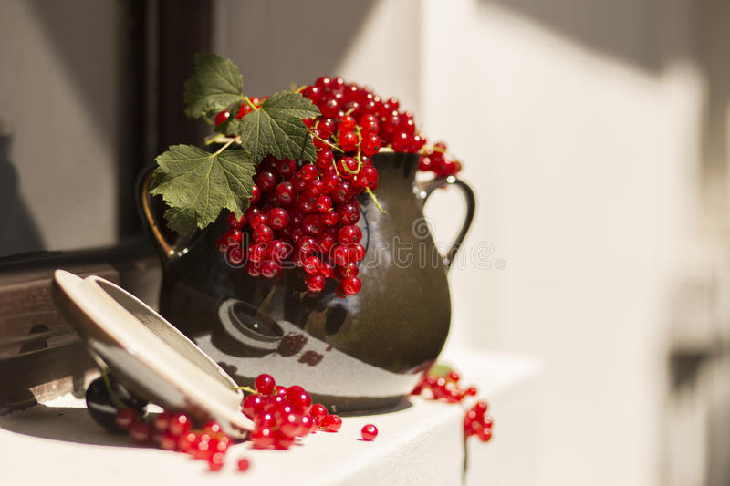 Pitcher/jug of redcurrant on a direct sunlight on a window stock image