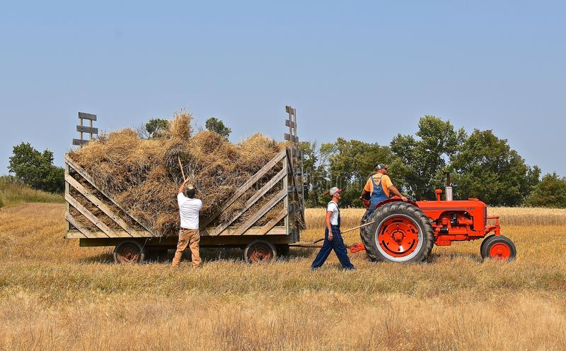 Pithing bundles unto a rack. ROLLAG, MINNESOTA, Sept 2, 2017: Unidentified workers pitch bundles of wheat on a hayrack pulled by a Case tractor at the at the stock photos