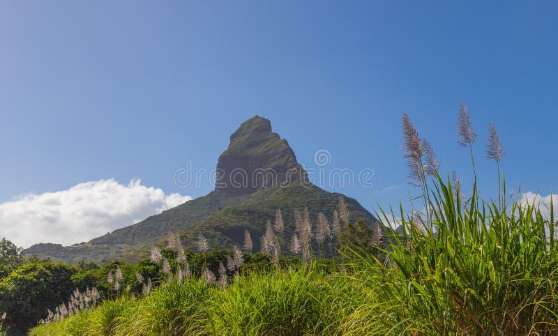 Piton de la Petite with sugar cane blossom mountain on Mauritius. Panorama royalty free stock photo
