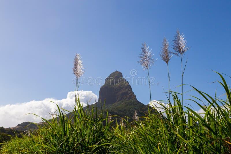 Piton de la Petite with sugarcane blossom mountain in Mauritius.  stock photography