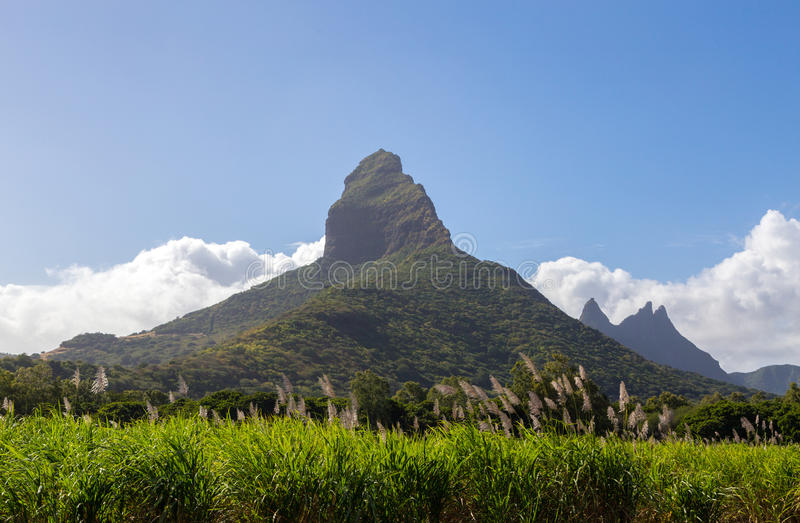 Piton de la Petite with sugarcane blossom mountain in Mauritius.  stock image