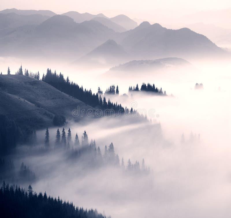 Pittoresk skog i dimman royaltyfri fotografi