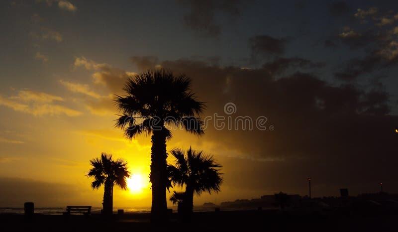 Pittoresk solnedgångsikt med silhouttepalmträd framme arkivbild