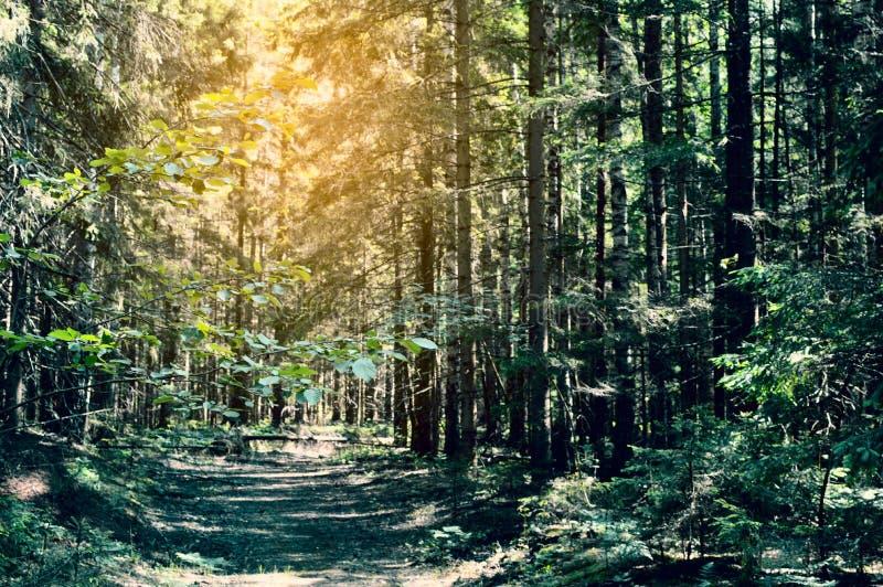 Pittoresk vandringsled i den mystiska skogen royaltyfria bilder