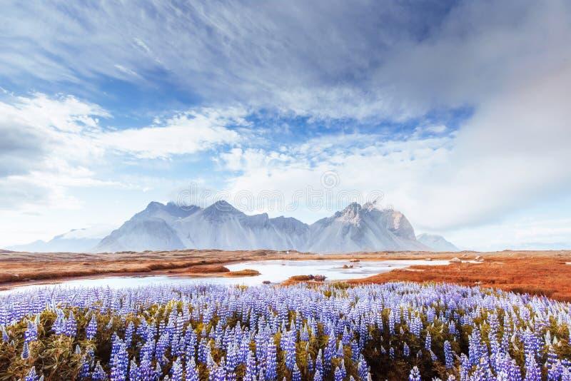Pittoreska sikter av floden och bergen i Island arkivbilder