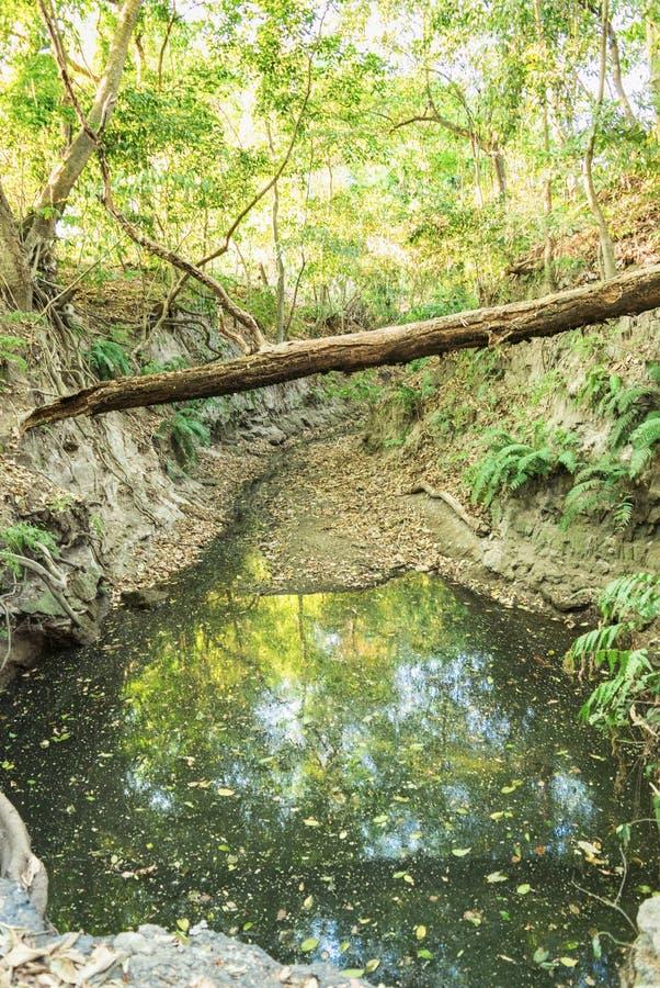 Pittoreskt damm i skogen arkivfoto
