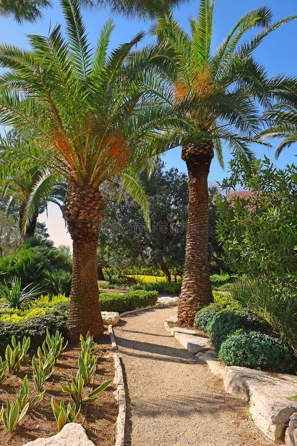 Pittoreskt hörn i parkera Ramat Hanadiv, Israel royaltyfria foton
