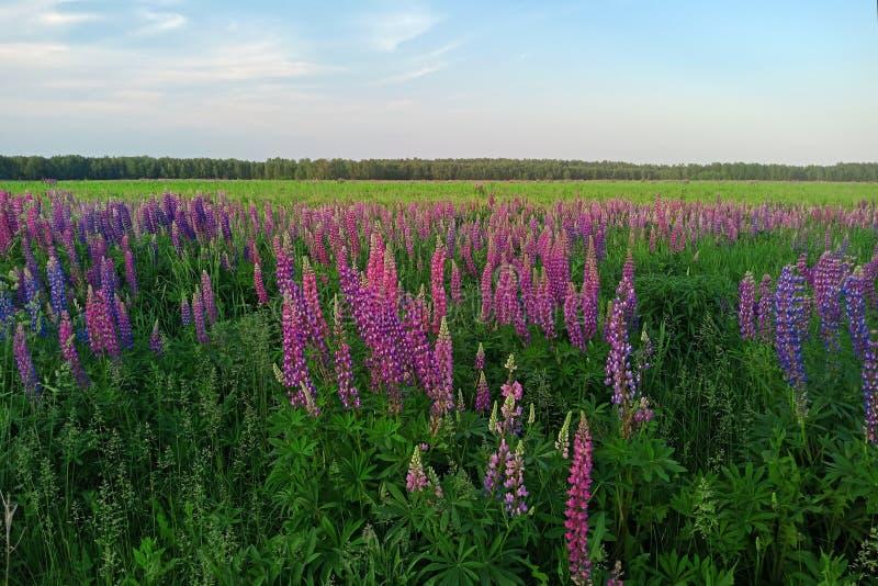 Pittoreskt landskap med blommor, fält och skogar i bygden arkivbild