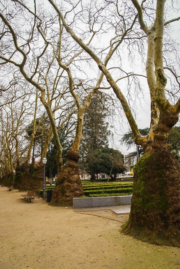 Pittoreskt landskap med konstiga träd i Porto, Portugal royaltyfria foton