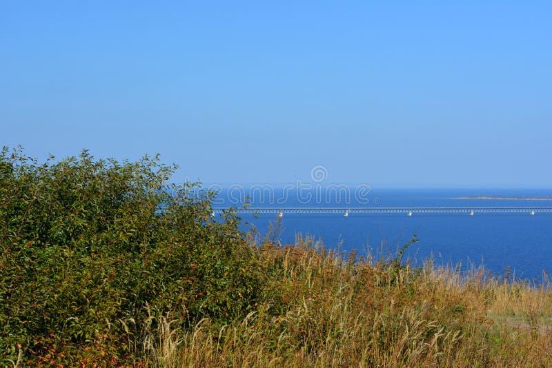 Pittoreskt landskap med träd, örter och bron över floden med blått vatten under blå himmel arkivfoton