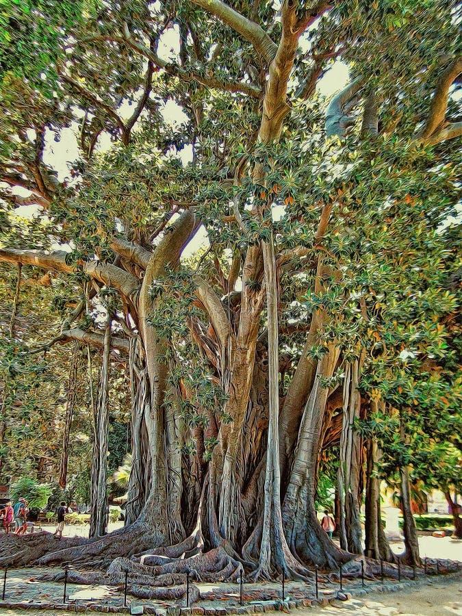 Pittura del vecchio albero Palermo Sicilia fotografia stock