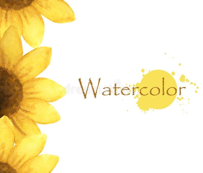 Pittura dell'acquerello del fiore giallo con il posto per i testo-girasoli illustrazione vettoriale