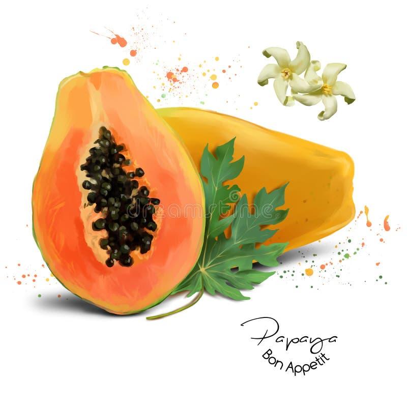 Pittura dell'acquerello della papaia royalty illustrazione gratis
