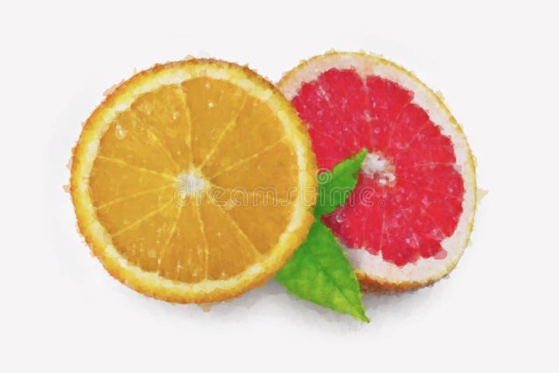 Pittura dell'arancia e del pompelmo dell'acquerello sul fondo bianco immagine stock