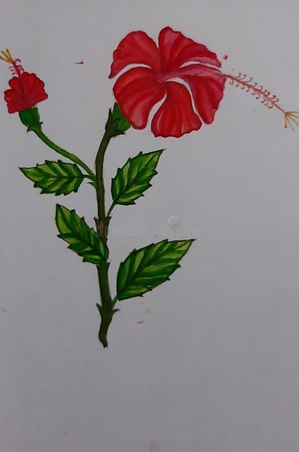 Pittura della rosa cinese fotografie stock libere da diritti