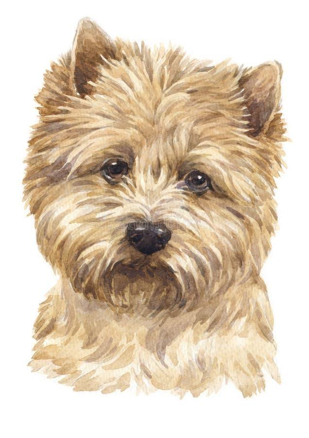 Pittura di colore di acqua del cairn Terrier 049 illustrazione di stock