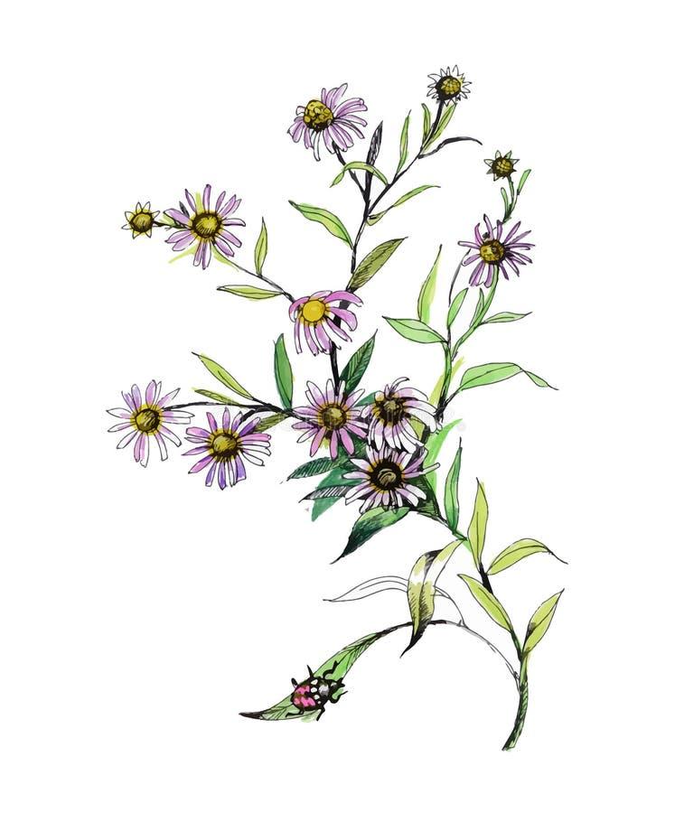Pittura disegnata a mano con i fiori variopinti su fondo bianco illustrazione vettoriale