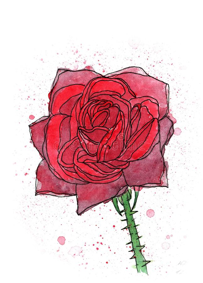 Pittura fatta a mano dell'acquerello di Rose Flower illustrazione vettoriale