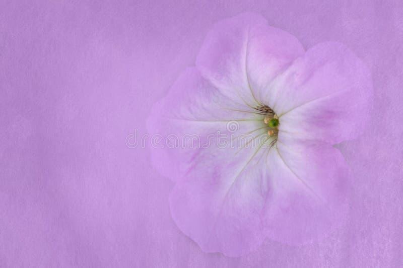 Pittura rosa del fiore selvaggio immagini stock libere da diritti