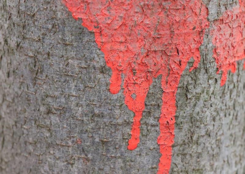 Pittura rossa sul dettaglio della corteccia di albero del faggio - edizione della foresta fotografia stock