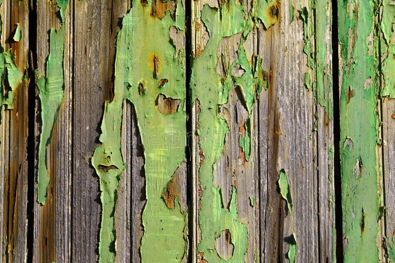 Pittura verde incrinata su una porta di legno fotografia stock libera da diritti