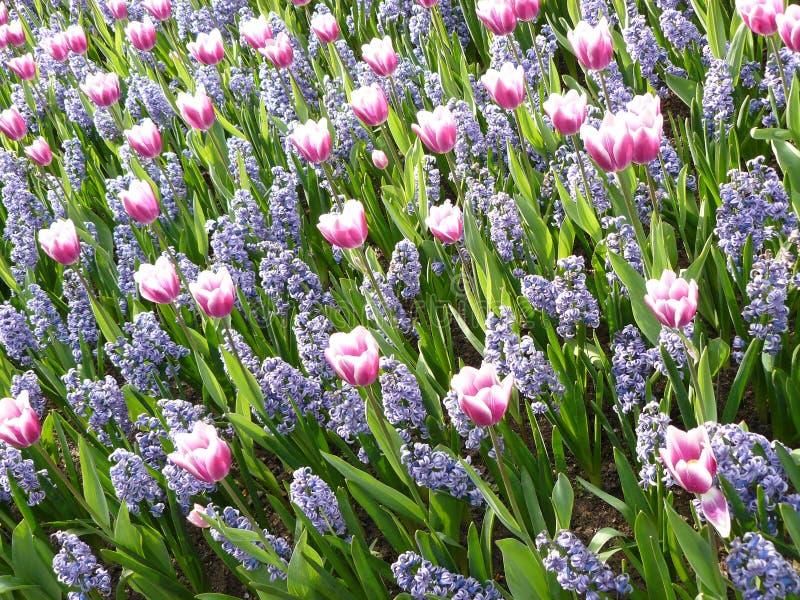 Pitture di aprile dell'Olanda 8 fotografia stock libera da diritti