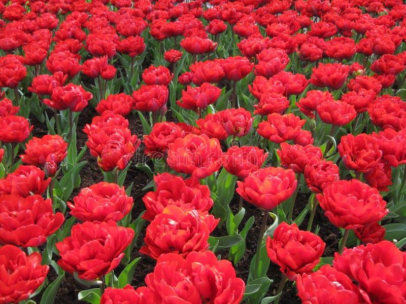 Pitture di aprile dell'Olanda 4 immagini stock